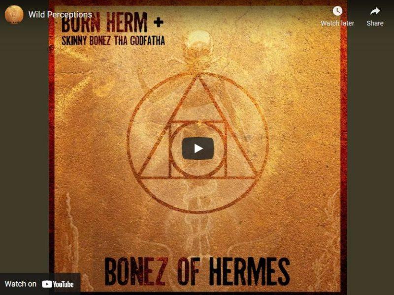 Burn Herm – Wild Perceptions